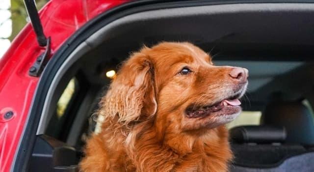Hund i Bil – regler 2021 & våra bästa tips